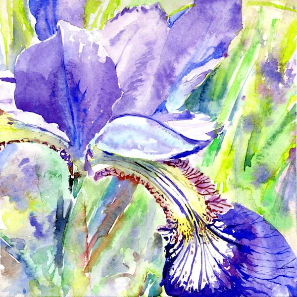 Iris  Art | Machalarts Watercolor Studio