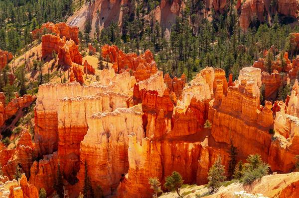 Bryce  Canyon National Park Colors Photography Art | Great Wildlife Photos, LLC
