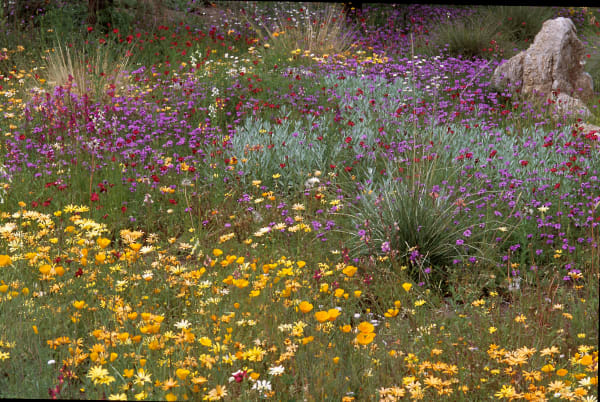 Desert Bloom Photography Art | Great Wildlife Photos, LLC
