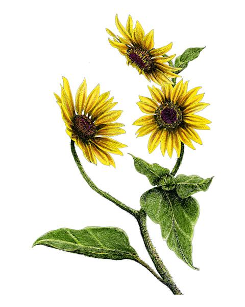 Sunflowers Art | Greg Lewallen