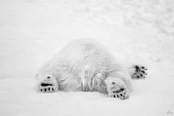 Polar Monday Morning  2/3 Ratio Art | TG Photo
