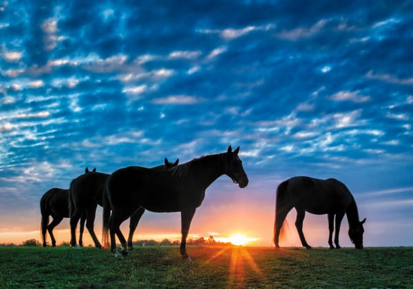 Sunset as thoroughbred horses graze