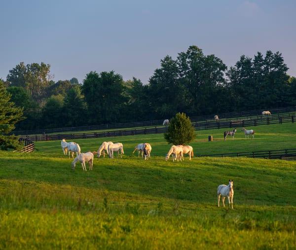 Grazing Horses 9271full