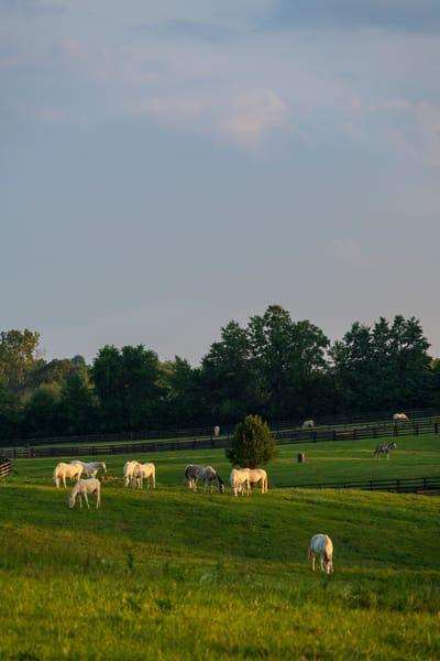 White Horses 9293full
