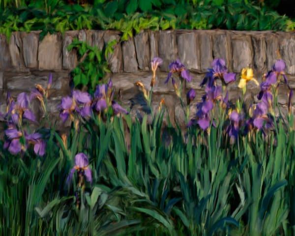 Flower Stone Iris P16x20txt Photography Art | Jeff Rogers Photography, Inc.