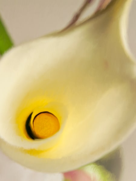 florals, flowers, calla lily,