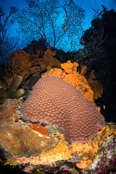 Hard Coral Reefscape is a fine art photograph created under the sea in the Caribbean and is available for sale.