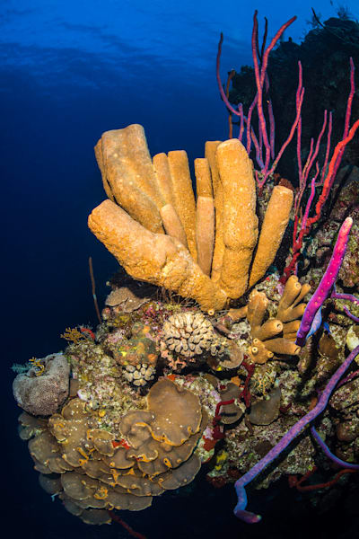 Yellow Sponge Formation is an underwater photograph of a coral reef available as fine art for sale.