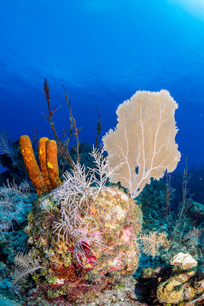 Caribbean Reef is a fine art photograph created underwater in the ocean and is available for sale.