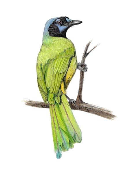 Green Jay Art | Greg Lewallen