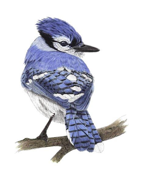 Blue Jay Art | Greg Lewallen