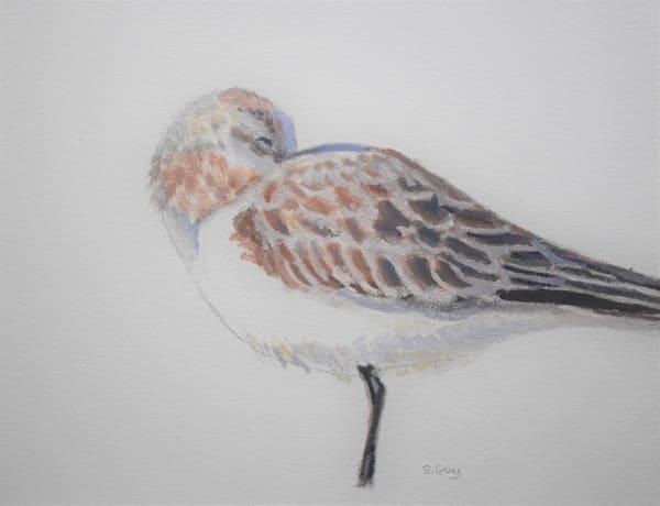 Resting Gull Art | Sharon Guy