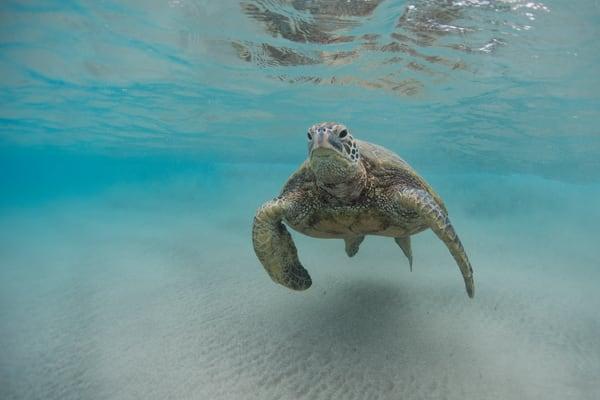 Undersea Surfer Photography Art | Douglas Hoffman Photography