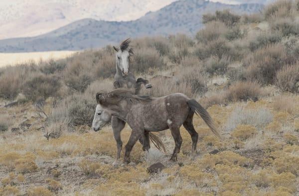 Roan Dispute Photography Art | Great Wildlife Photos, LLC