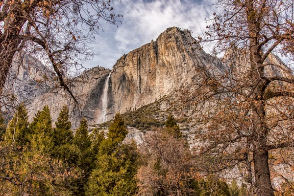 Yosemite Falls Pine Trees Art | Michael Blanchard Inspirational Photography - Crossroads Gallery