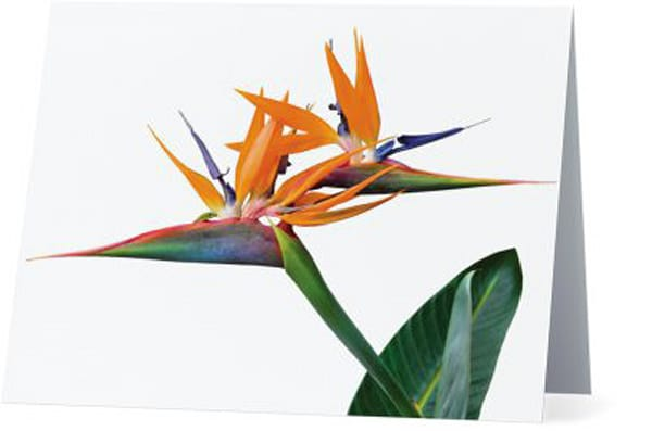 3 Heads Are Better Than One Notecards | Bird In Paradise