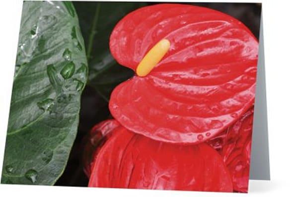 Anthurium Notecard  | Bird In Paradise