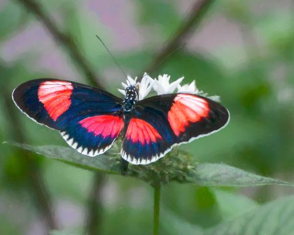 Paintbox Tropical Butterfly Art   Light Pixie Studio