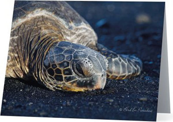 Black Sand Nap Notecard | Bird In Paradise