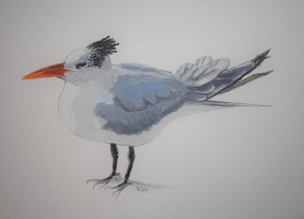 Royal Tern Art | Sharon Guy
