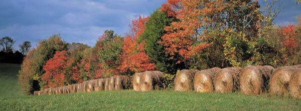 Kentucky Hay Panoramic