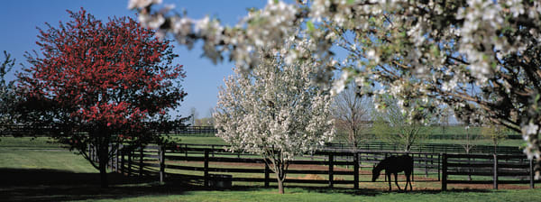 Spring in the Bluegrass