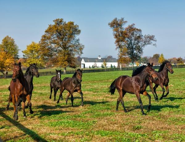 Running Horses1220899