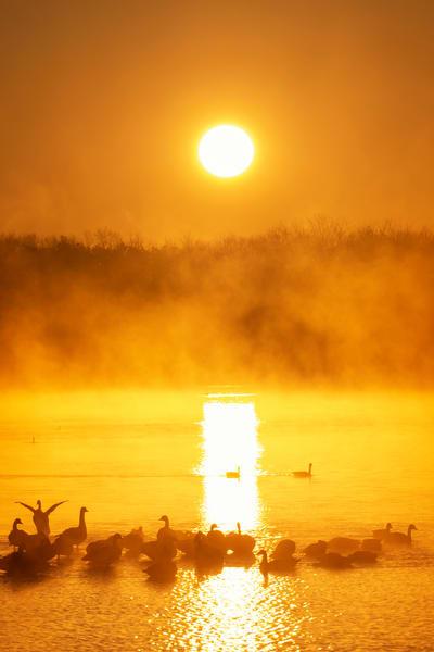 Sunrise Geese 8782 Photography Art   Jeff Rogers Photography, Inc.