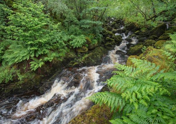 Scotland Stream 0881