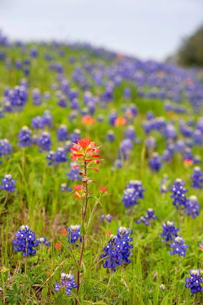 Texas 4571.Full Photography Art | Jeff Rogers Photography, Inc.