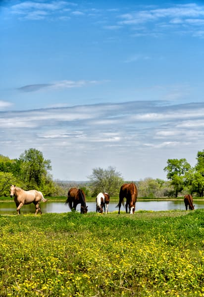 Texas 4880full Photography Art | Jeff Rogers Photography, Inc.