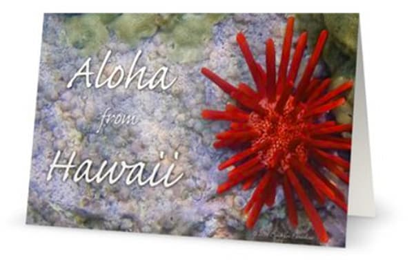 Aloha Red Pencil Urchin 5x7 Card | Bird In Paradise