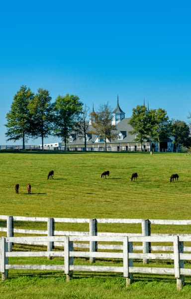 Horses Manchester 0054 Photography Art | Jeff Rogers Photography, Inc.