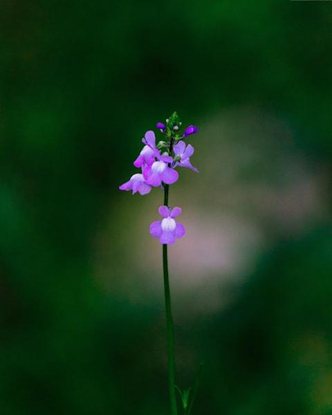 Small Flower 2017