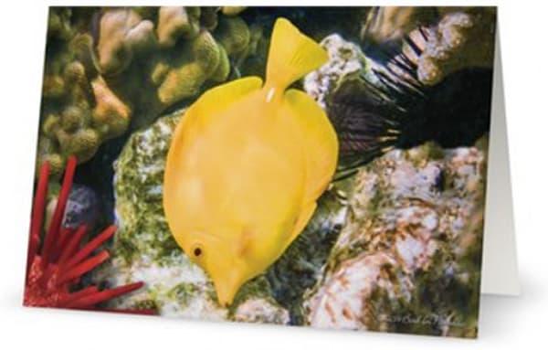 Yellow Tang 5x7 Card | Bird In Paradise