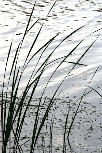 Stillness And Reflection Art   Susan Searway Art & Design