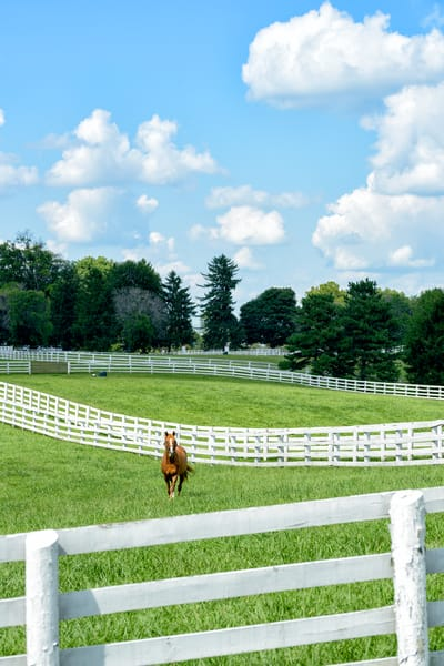 Horses 9495full Photography Art | Jeff Rogers Photography, Inc.