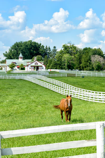 Horses 9502full Photography Art | Jeff Rogers Photography, Inc.