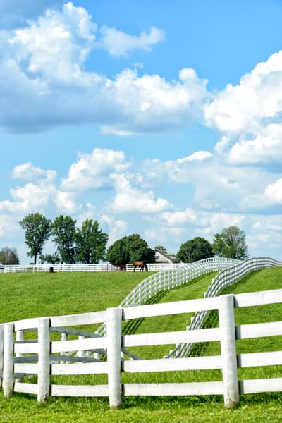 Horses 9547full Photography Art | Jeff Rogers Photography, Inc.