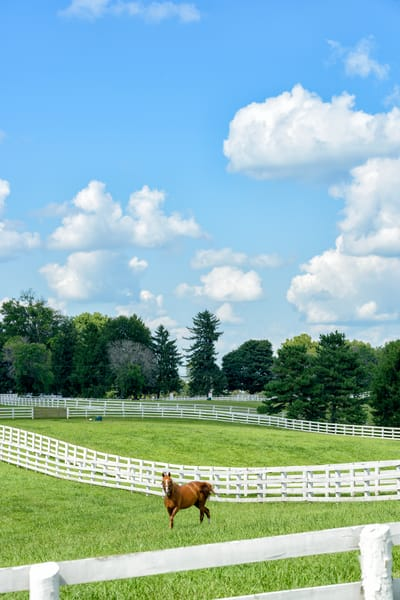 Horses 9493full Photography Art | Jeff Rogers Photography, Inc.