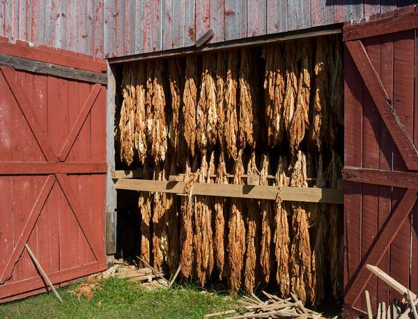 Tobacco Behind Doors 1010250full