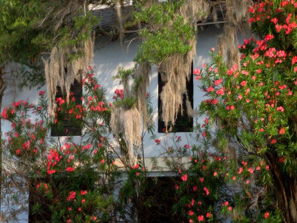 Shem Creek and Blooms