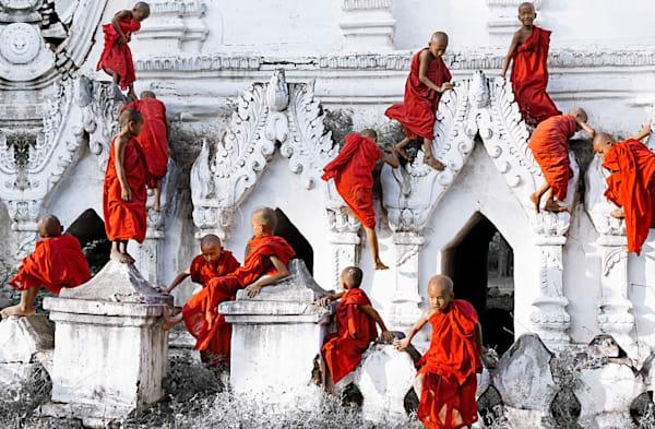 Climbing Cardinals Photography Art | Felice Willat Photography