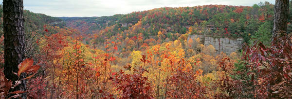 Fall at Red River Gorge Overlook