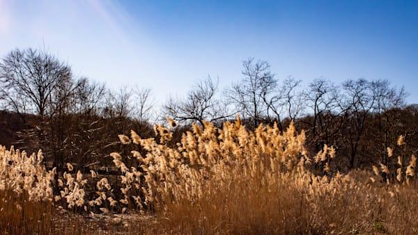 Sunlight On Inwood Park, Nyc Photography Art | Ben Asen Photography