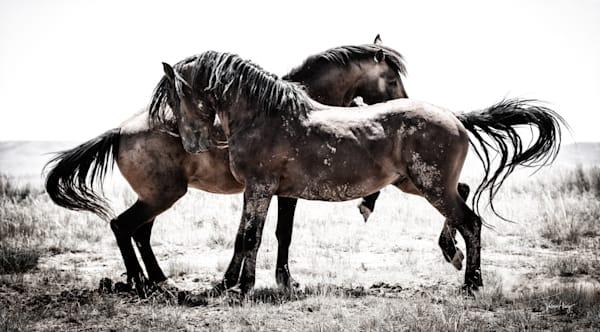 Being Wild Photography Art | Koru Photo Designs