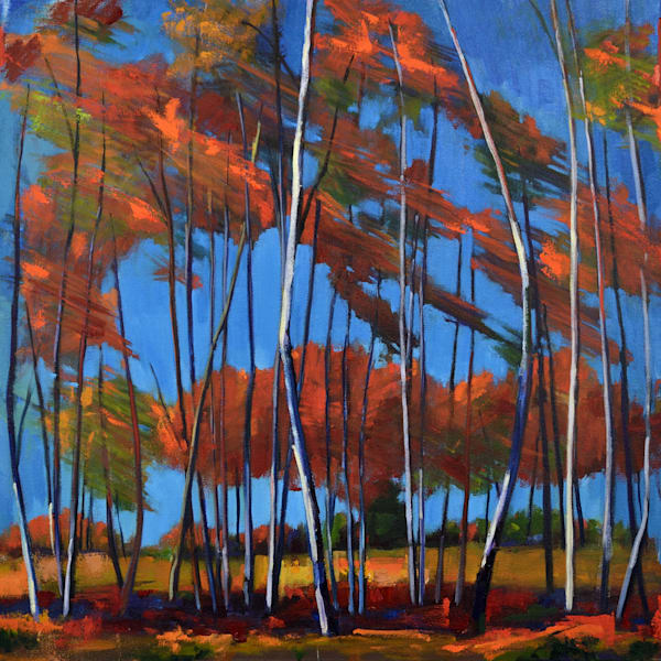 Windy Birch Grove Art | Jenn Hallgren Artist