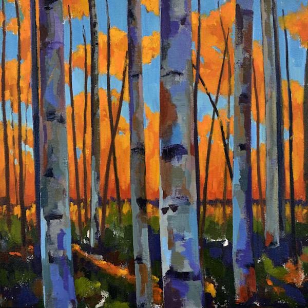 Birch Sunset Art   Jenn Hallgren Artist