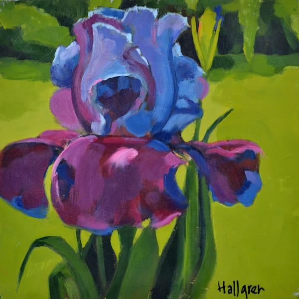 Bearded Iris Mini Art | Jenn Hallgren Artist