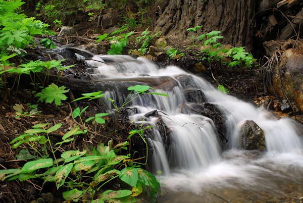 Waterfall In Julia Pfeiffer Burns State Park, Ca Photography Art | RAndrews Photos